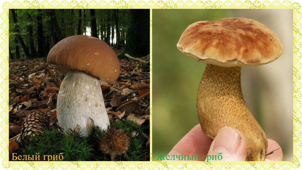 Белый гриб 4