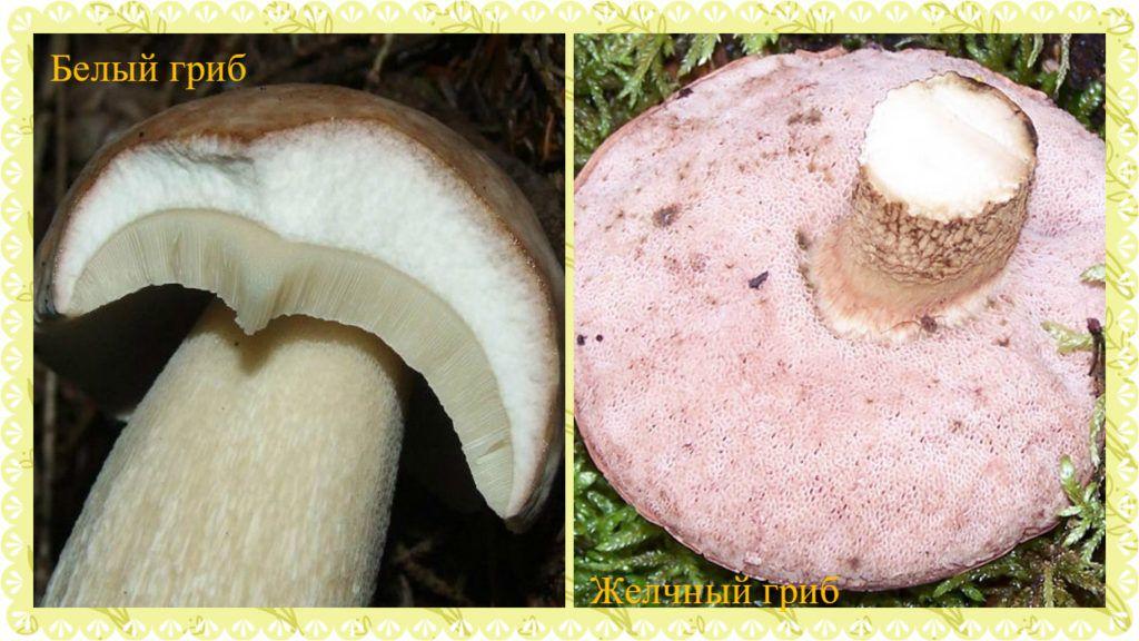 Белый гриб 5