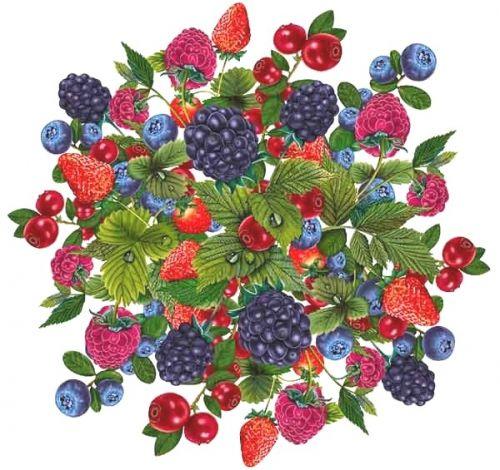 Цвет однородный, свойственный данному виду свежих плодов в потребительской стадии зрелости.