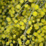 Лечебные травы список описание свойства