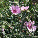 Какие бывают лечебные растения