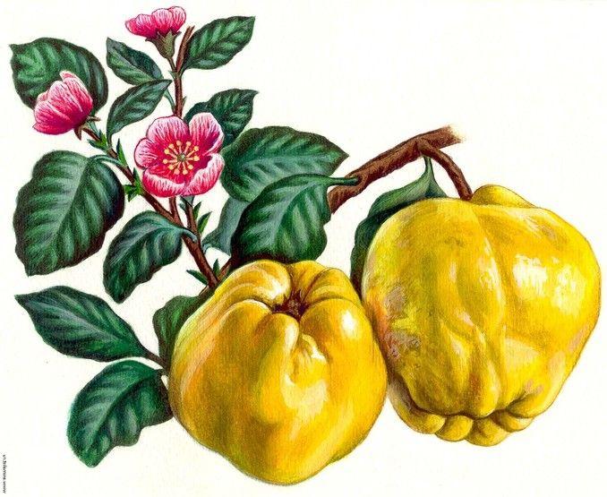 срок хранения семян арбузов