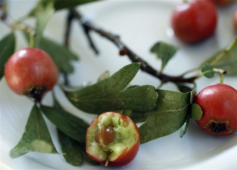 боярышник плод