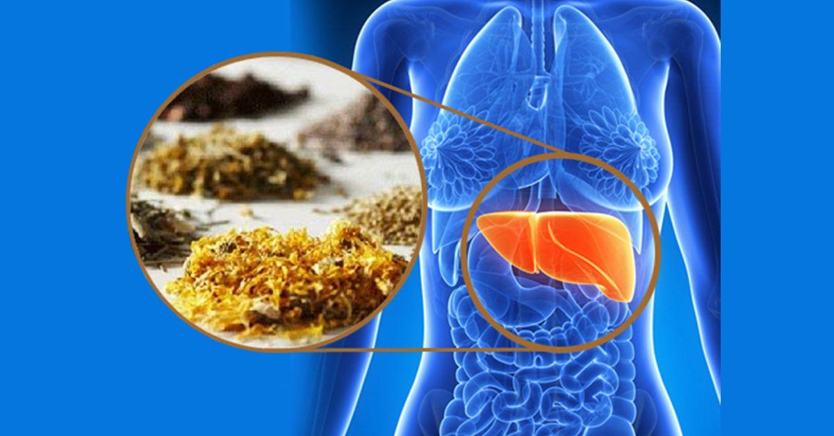 гепатит и травы