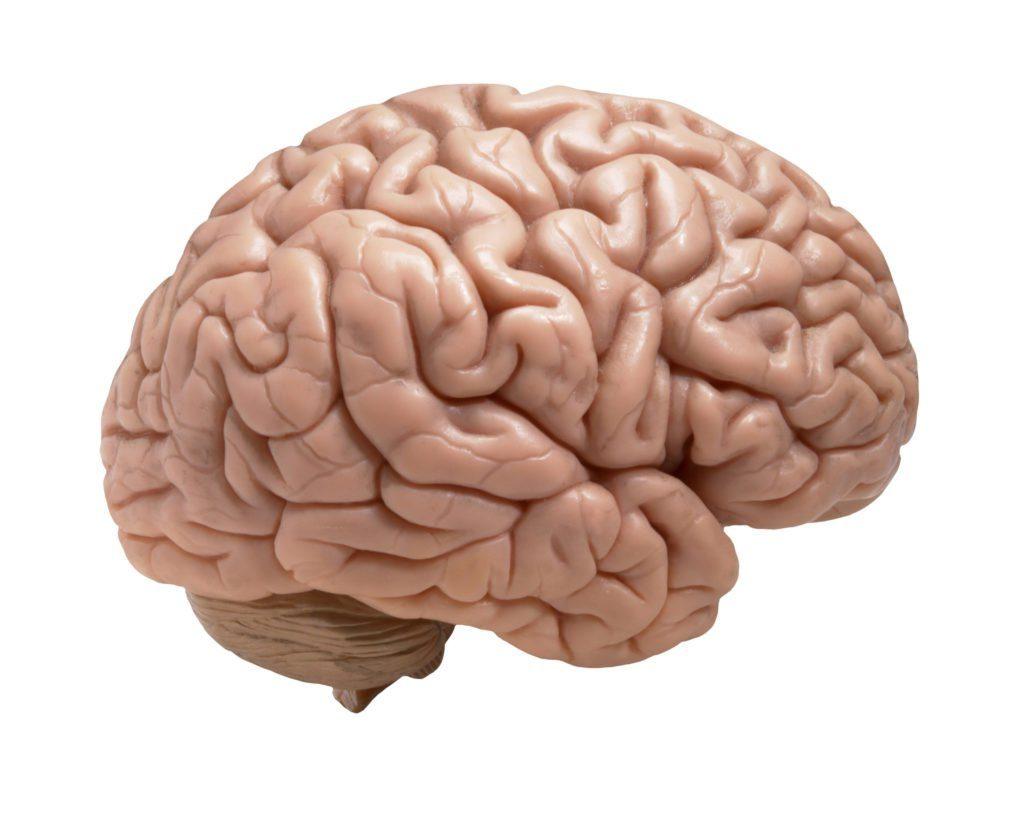 травы от мозга