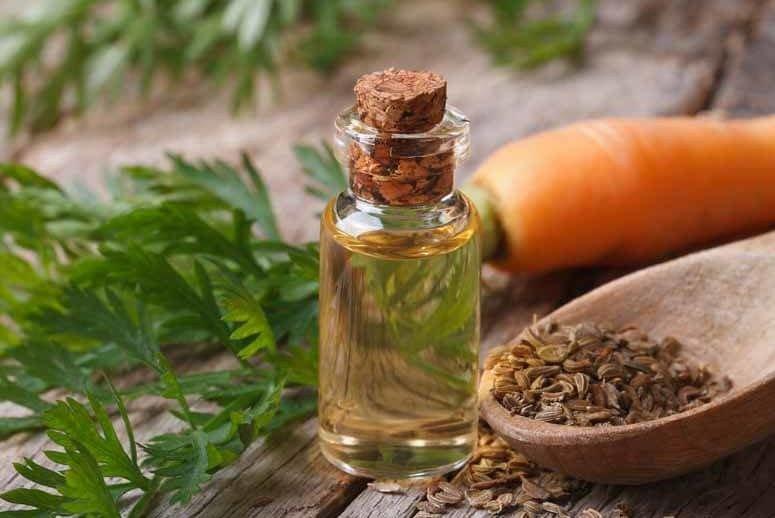 морковь лекарственные свойства